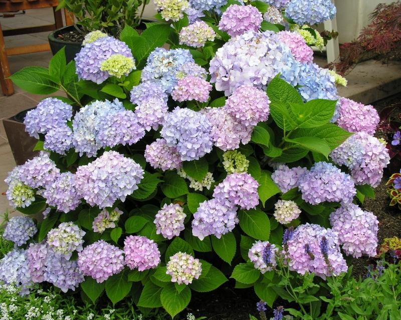 sandy bottomshrubs, Natural flower