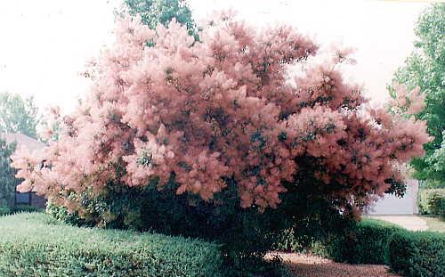 Sandy bottom shrubs mightylinksfo